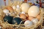 Свадебная традиция в Испании «Принеси яйца в Санта-Клару»